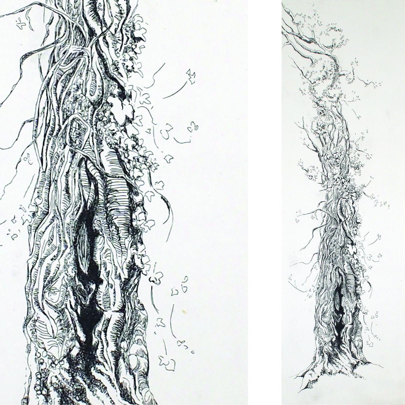 Gravure eau forte d'arbre, tronc de pin creux colonisé par le lierre