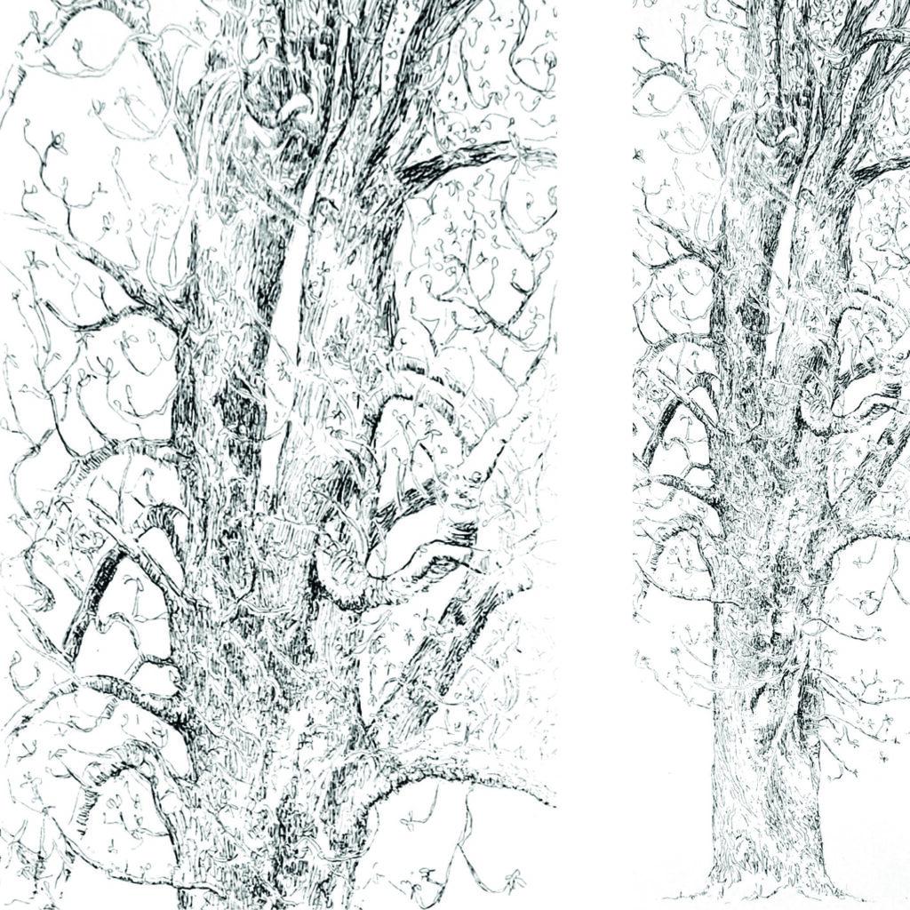Installation théâtre d'ombre, les kakémonos mobiles et leurs ombres mouvantes dessinent une forêt